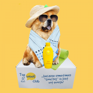 StayCation box for dogs