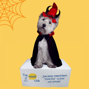 Halloween Box for Dogs