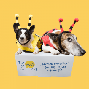Bug-alicious box for dogs