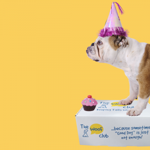 The Birthday Box for Dogs