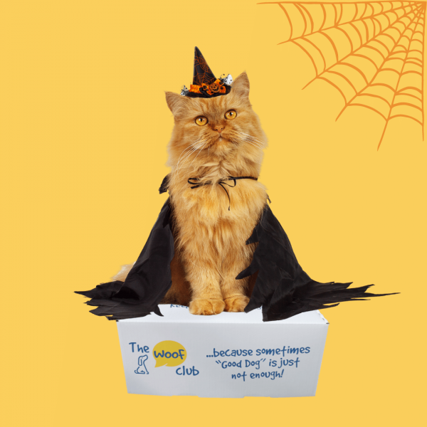Halloween box for cats