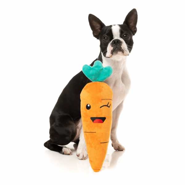 boston terrier with carrot dog toy