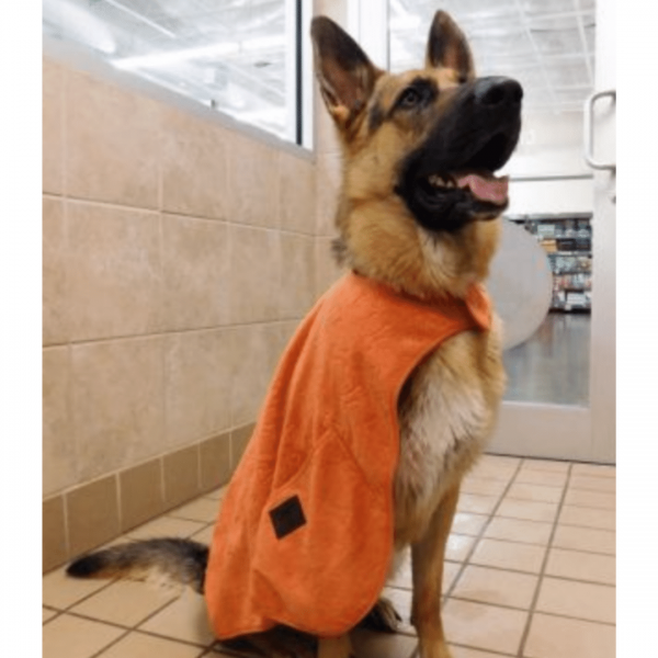 Large Dog in Cape Towel