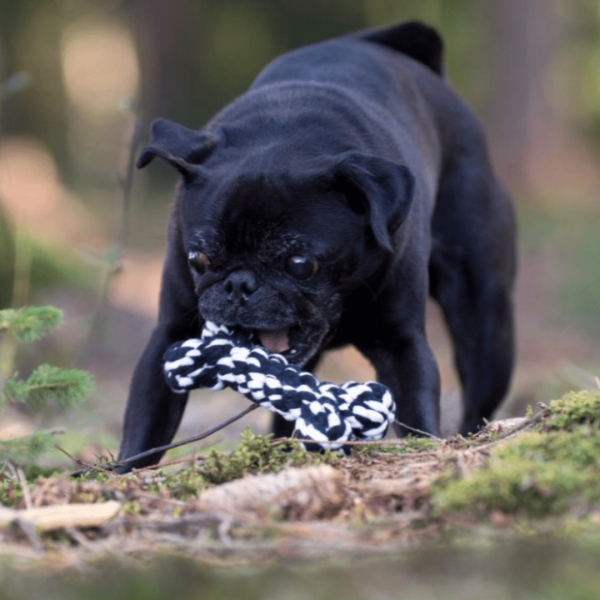 Bonnie Bone Dog toy