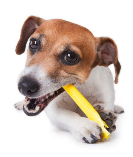 6 step guide to cleaning your dog's teeth – with dental hygiene tips